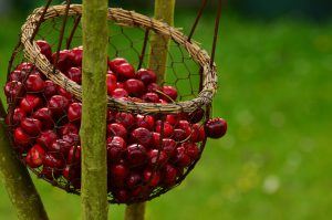 cherries for restful night