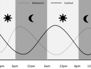 melatonin and cortisol cycles