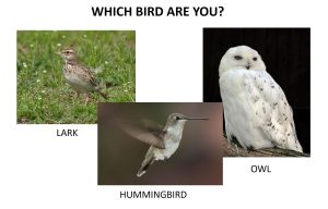 which bird are you